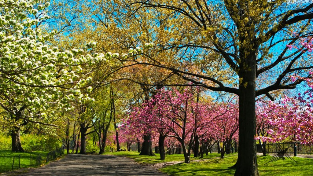 blog-o-cestovani-central-park-nyc-photoandtraveling