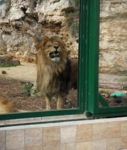 zoo lev